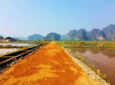 Ninh Binh Rice Paddies